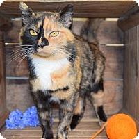 Adopt A Pet :: Harper - Germantown, MD