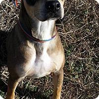 Adopt A Pet :: PREACHER - Cleveland, MS