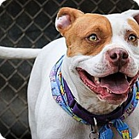 Adopt A Pet :: Honey - Santa Barbara, CA