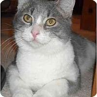 Adopt A Pet :: Lil Bit - Mesa, AZ