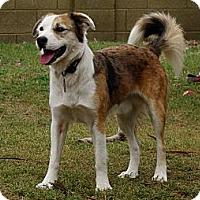 Adopt A Pet :: REILY - Phoenix, AZ