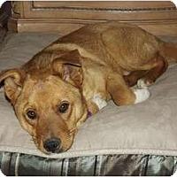 Adopt A Pet :: Bert - Phoenix, AZ