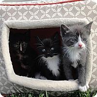 Adopt A Pet :: Princess - Barnegat, NJ