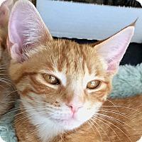Adopt A Pet :: Izzy - Winchester, CA