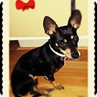 Adopt A Pet :: Lilly - Studio City, CA
