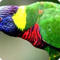 Adopt A Pet :: BIRDS BIRDS BIRDS - DeLand, FL