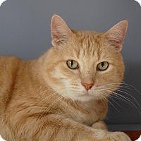 Adopt A Pet :: Bobby - Winchendon, MA