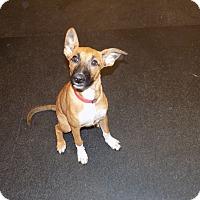 Adopt A Pet :: suzy - Jupiter, FL