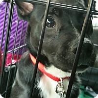 Adopt A Pet :: Max - Ogden, UT