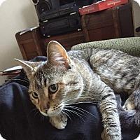 Adopt A Pet :: Revka - Chicago, IL