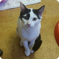 Adopt A Pet :: Louise - Tallahassee, FL