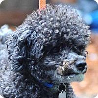 Adopt A Pet :: Harley - Vernonia, OR