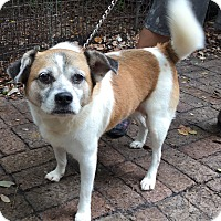Adopt A Pet :: Gretal (Maggie) - Orlando, FL