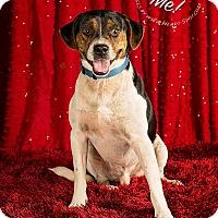 Beagle/Pug Mix Dog for adoption in Gillsville, Georgia - Andy