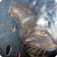 Adopt A Pet :: 318118 - Wildomar, CA