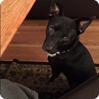 Adopt A Pet :: Jack - Bellingham, WA