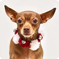 Adopt A Pet :: Spike - Dublin, CA
