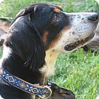Adopt A Pet :: JOJO - Pine Grove, PA