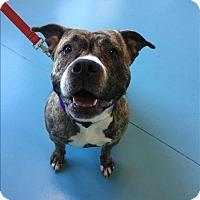 Adopt A Pet :: September - Portsmouth, VA