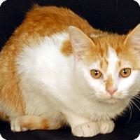 Adopt A Pet :: Jack - Newland, NC