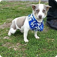 Adopt A Pet :: Taco - Lexington, KY