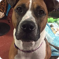 Adopt A Pet :: Bailey - Frankfort, IL