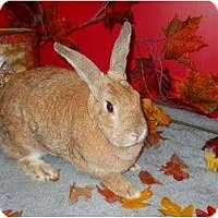 Adopt A Pet :: Chrissy - Roseville, CA