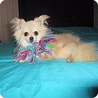 Adopt A Pet :: Buttercup - Mooy, AL