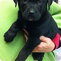 Adopt A Pet :: Frannie - Kingwood, TX