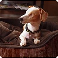 Adopt A Pet :: PRINCE HENRY - Portland, OR
