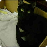 Adopt A Pet :: Mya - Mission, BC