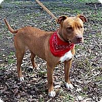 Adopt A Pet :: AUGGIE - Leland, MS