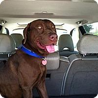 Adopt A Pet :: Keegan - Oak Brook, IL