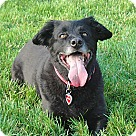 Adopt A Pet :: ADOPTION PENDING- Max