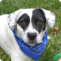 Adopt A Pet :: Olive - Mocksville, NC