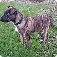 Adopt A Pet :: Aggy - Toledo, OH