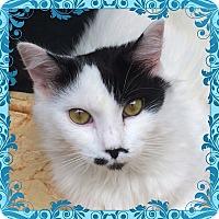 Adopt A Pet :: Phoebe - Brooklyn, NY