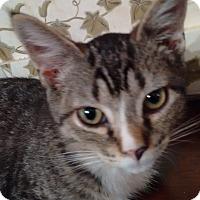 Adopt A Pet :: Oscar - Morganton, NC