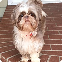 Adopt A Pet :: Boomer - Atlanta, GA