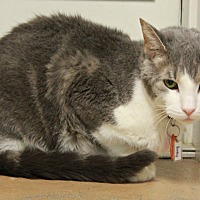 Adopt A Pet :: Binky - New Richmond,, WI