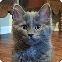 Adopt A Pet :: Dahlia - Austin, TX