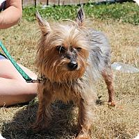Adopt A Pet :: Ozzie - Elyria, OH