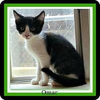Adopt A Pet :: Omar - Tombstone, AZ