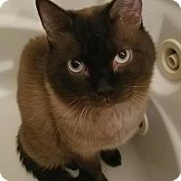 Adopt A Pet :: Caspian - Pinckney, MI