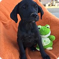 Adopt A Pet :: Ethel - Studio City, CA