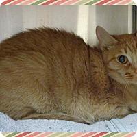 Adopt A Pet :: TIGRA - Marietta, GA