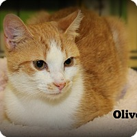 Adopt A Pet :: Oliver - Springfield, PA