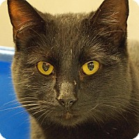 Adopt A Pet :: Rudy - Sprakers, NY