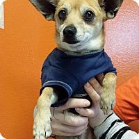 Adopt A Pet :: Dumbo - Westminster, CA