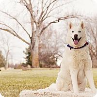 Adopt A Pet :: Zeus - Boise, ID